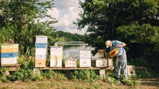 Beekeeper tending hives in florida