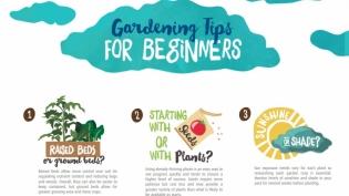 Garden tips for beginners illustration edible northeast florida