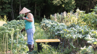 Picking Kale at Down to Earth Organic Farm in Jacksonville Florida