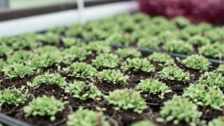 Microgreens sprout at Gyo Greens in Ponte Vedra