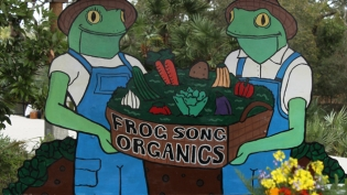 Frog Song Organics farm in Hawthorne Florida